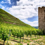Summer landscape with vineyard and ancient watch tower