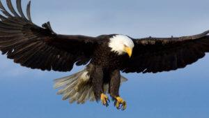 Vliegen als een arend