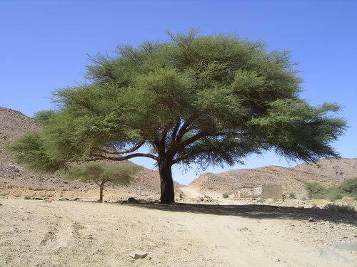 Vruchten van de woestijn