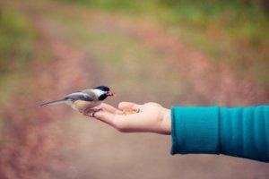 Alles in Zijn hand