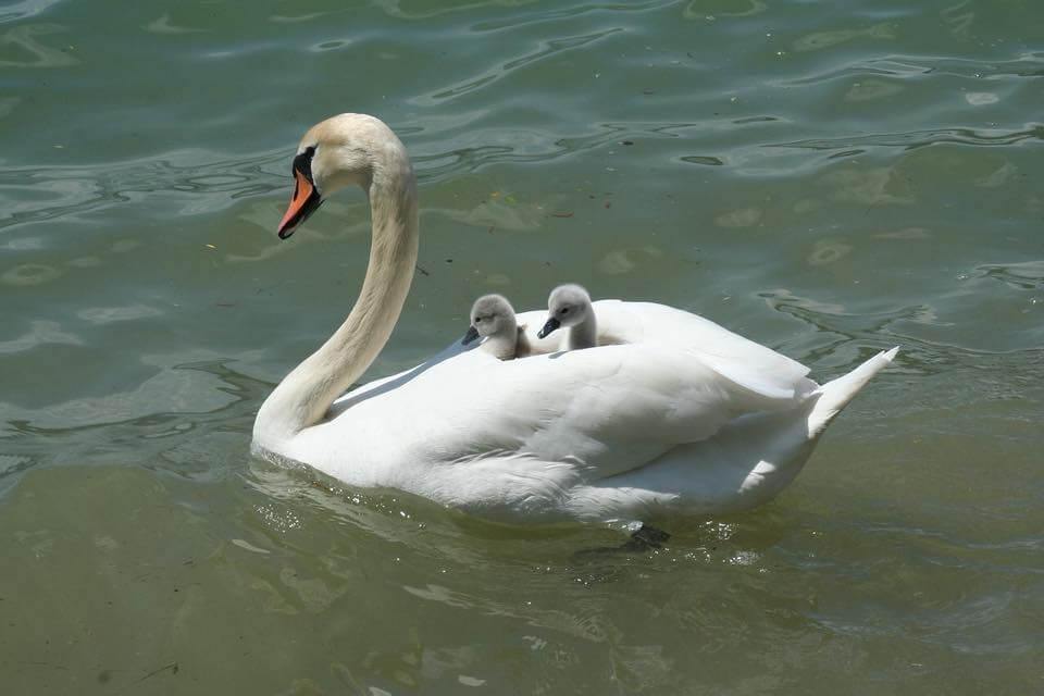 Meer dan een moeder