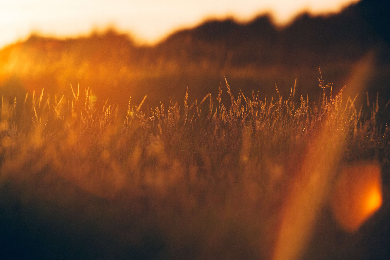 Gebedsconcert 'Heal This Land'